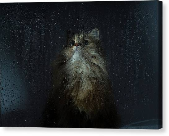 Cat By Rainy Window Canvas Print by Benjamin Torode