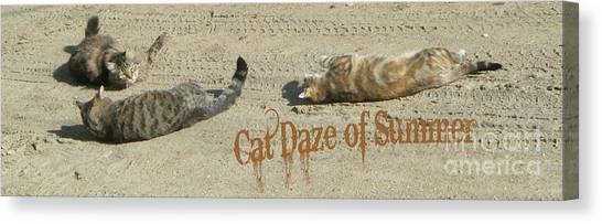 Cat Daze Of Summer Canvas Print