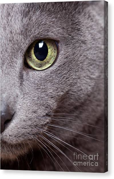 Thoroughbreds Canvas Print - Cat Eye by Nailia Schwarz