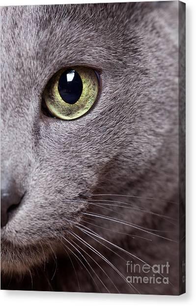 Nose Canvas Print - Cat Eye by Nailia Schwarz