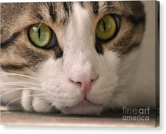 Egyptian Maus Canvas Print - Cat Eyes by Heidi Emanouel