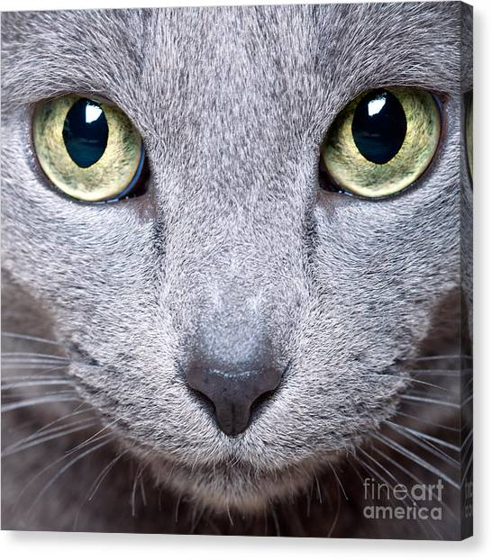 Nose Canvas Print - Cat Eyes by Nailia Schwarz