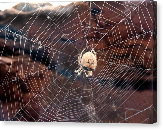 Cat Faced Spider Canvas Print