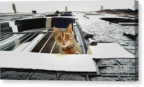 Cat In Amsterdam Canvas Print