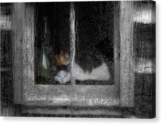 Reference Canvas Print - Cat In The Window by Jack Zulli