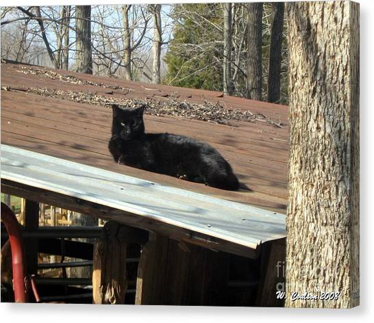 Cat On A Tin Roof Canvas Print