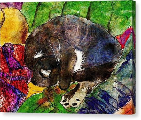 Cat On Clothes Canvas Print