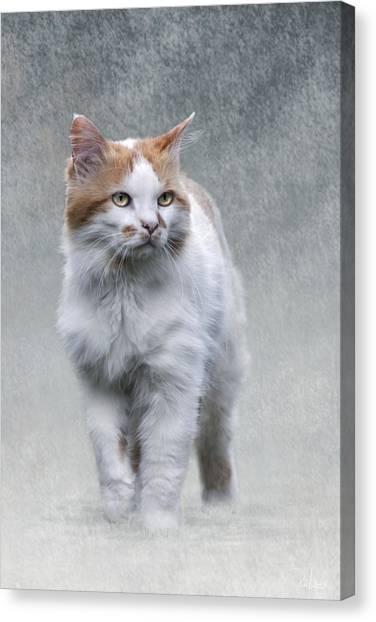 Cat On Texture - 01 Canvas Print
