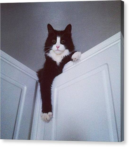 Tuxedo Canvas Print - Cat On The Cupboard by Tasha Pav