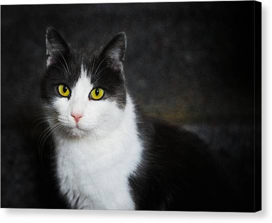 Cat Portrait With Texture Canvas Print