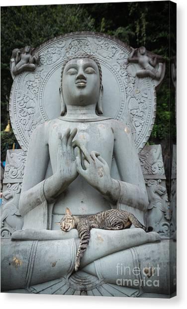 Cat Sleeping On The Lap Buddha Statues. Canvas Print