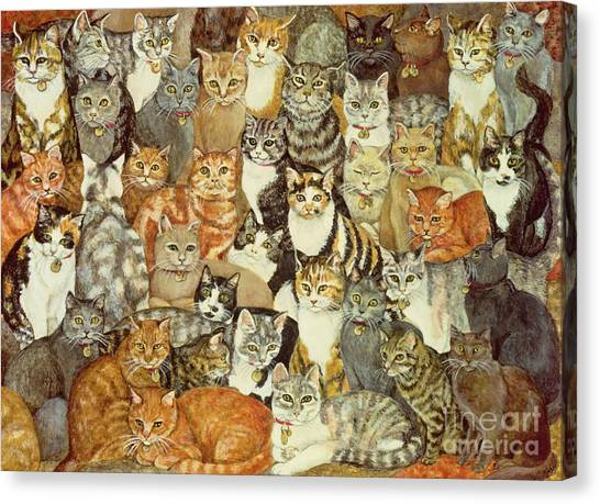 Pets Canvas Print - Cat Spread by Ditz
