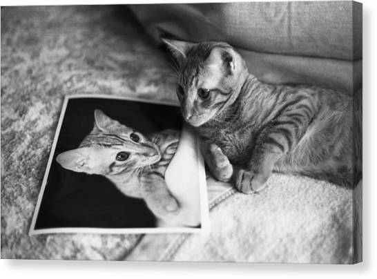Cat Vanity Canvas Print