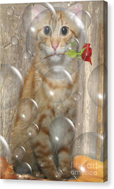 Cat With Bubbles Canvas Print by Jo Collins