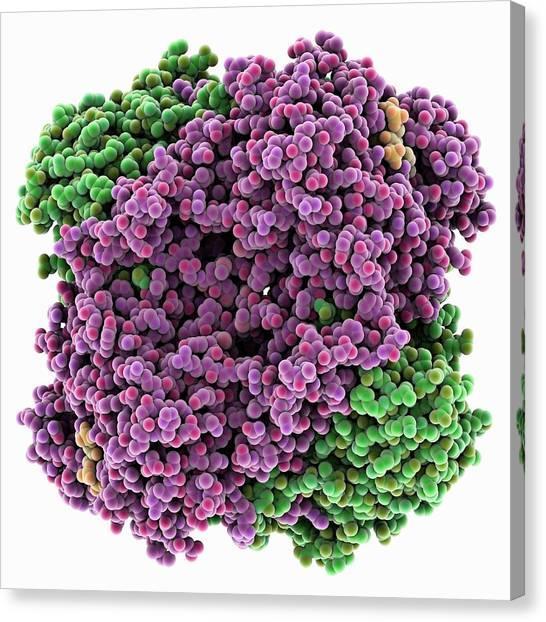 Biochemical Canvas Print - Catalase by Laguna Design