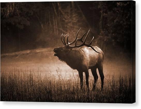Cataloochee Bull Elk In Sepia Canvas Print