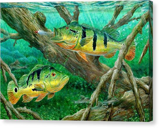 Catching Peacock Bass - Pavon Canvas Print