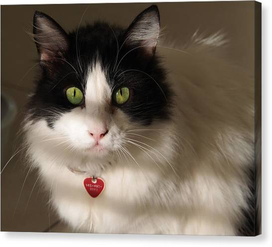 Cat's Eye Canvas Print
