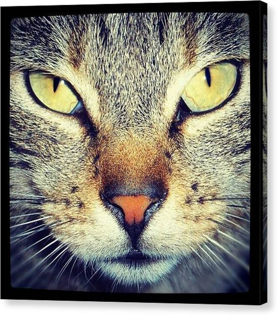 Kittens Canvas Print - Cat's Eyes by Emanuela Carratoni