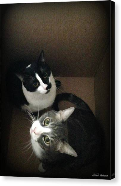 Cats In The Box Canvas Print