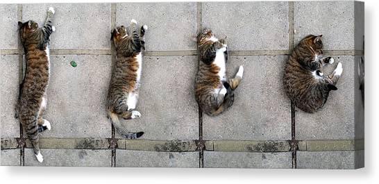 Cat's Life 3 Canvas Print