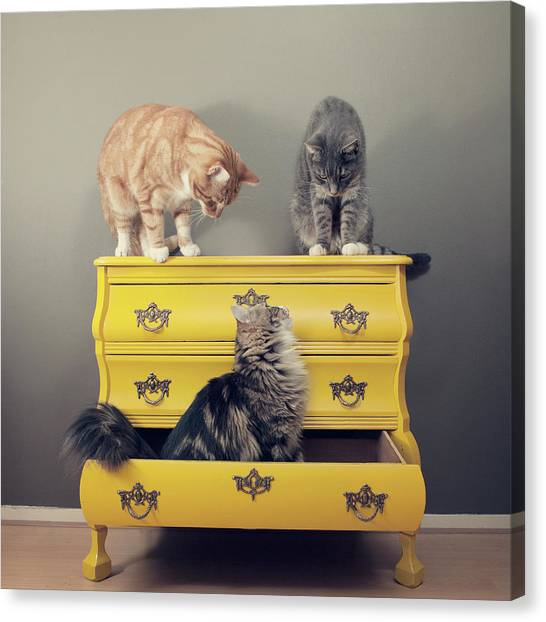 Drawers Canvas Print - Cats Sitting On Cabinet by Paula Daniëlse