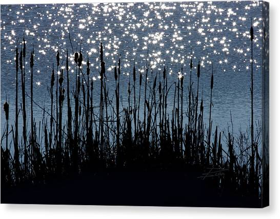 Cattails And Sparkle Canvas Print