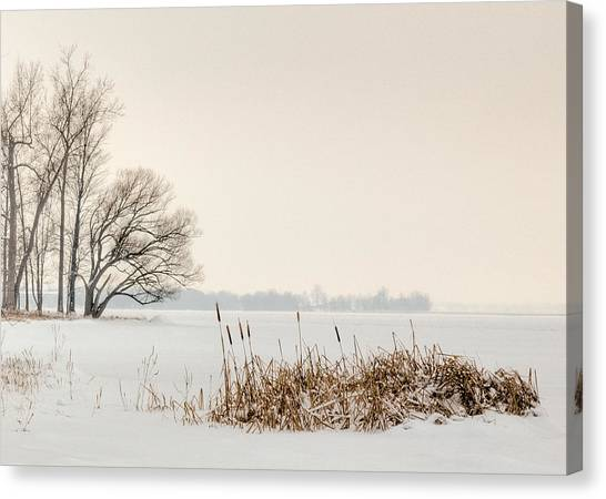 Cattails By The Shore In Winter Canvas Print