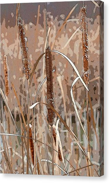 Cattails In The Fall Canvas Print