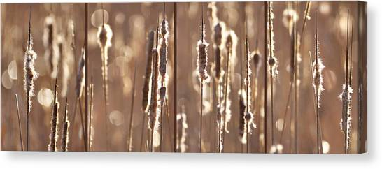 Cattails In The Light Canvas Print by Leda Robertson