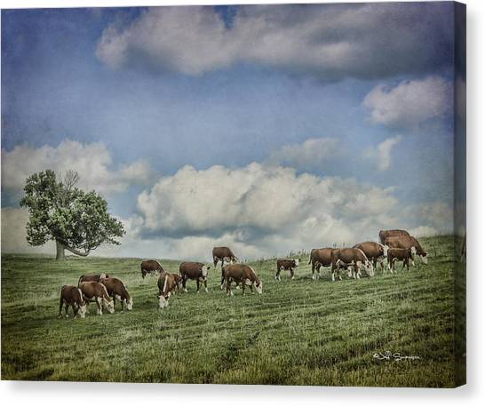 Cattle Grazing Canvas Print by Jeff Swanson