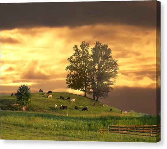 Cattle On A Hill Canvas Print