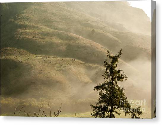 Cattle On Hillside 1.7138 Canvas Print by Stephen Parker