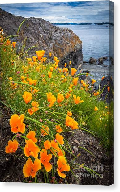 Cattle Point Poppies Canvas Print