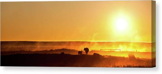 Cattle Silhouette Panorama Canvas Print by Imaginegolf