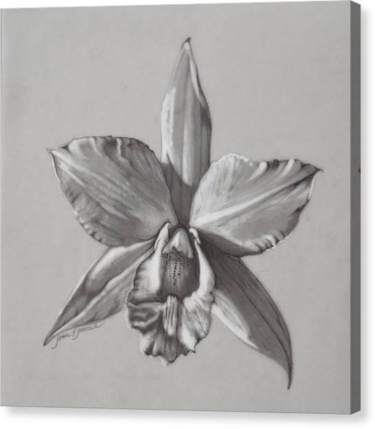 Cattleya II - Iwanagara Canvas Print