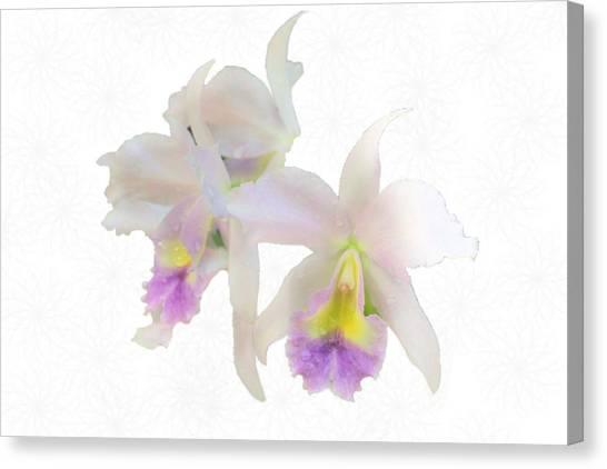 Cattleya Orchids Softly Canvas Print by Rosalie Scanlon