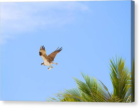 Canvas Print - Caught 2 by Fizzy Image