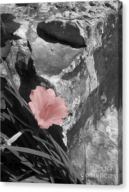 Caught Between A Rock And A Hard Place Canvas Print