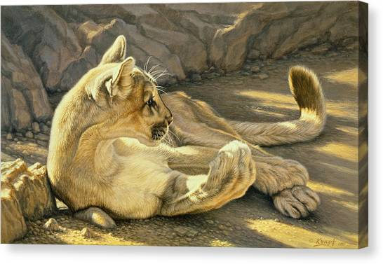 Mountain Lion Canvas Print - Caught Napping by Paul Krapf