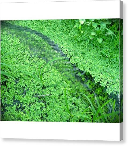 Marshes Canvas Print - Caught This On My Evening Walk by Marcus Friedhofer