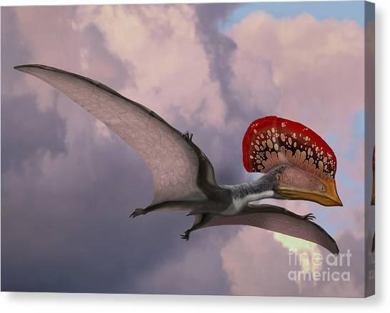 Pterodactyls Canvas Print - Caupedactylus Ybaka, An Extinct by Sergey Krasovskiy