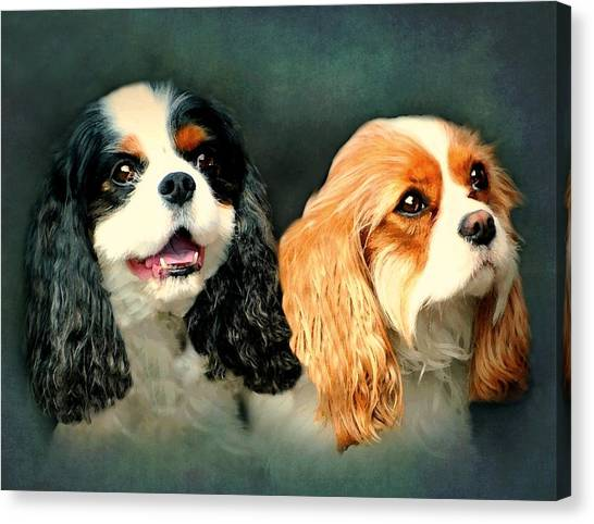 Cavalier King Charles Canvas Print