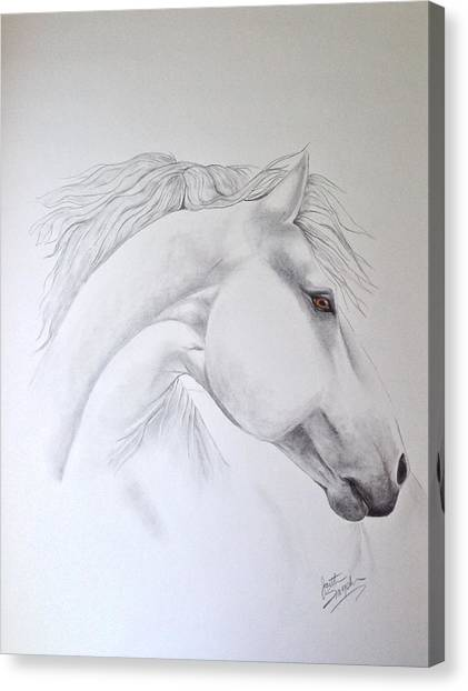 Cavallo Canvas Print