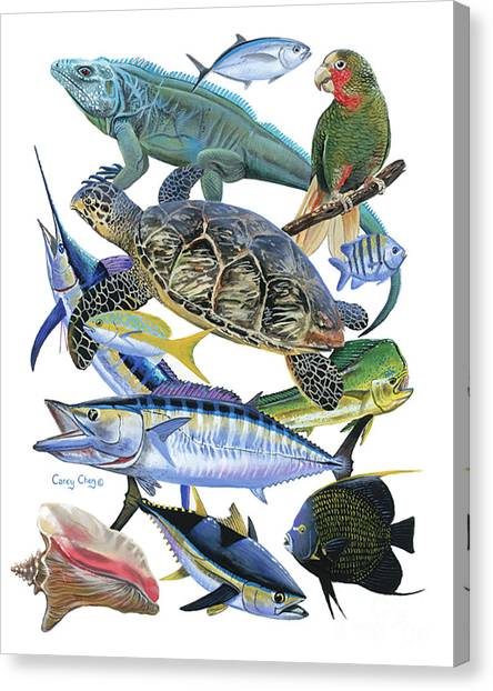 Iguanas Canvas Print - Cayman Collage by Carey Chen
