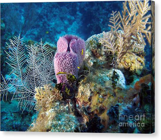 Fiji Canvas Print - Cayman Reef by Carey Chen