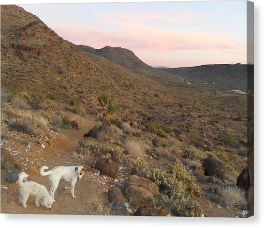 Ceaser, Mocha, And Chico In The Cerbat Mountains Canvas Print by James Welch