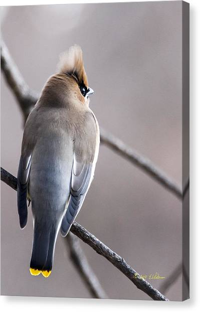 Canvas Print featuring the photograph Cedar Waxwing  by Edward Peterson