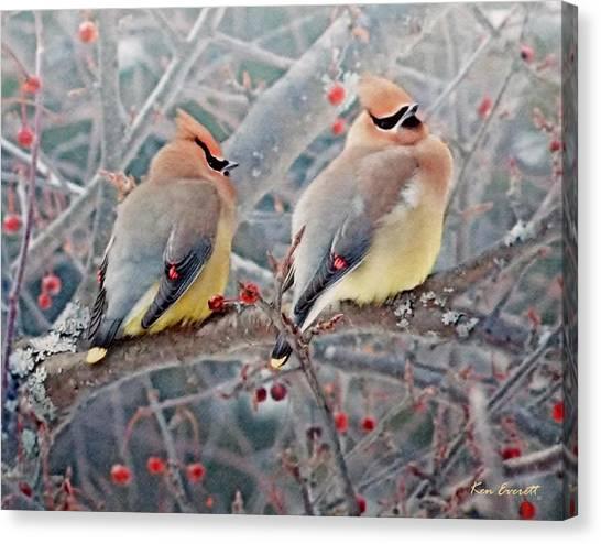 Cedar Waxwing Canvas Print - Cedar Waxwings by Ken Everett