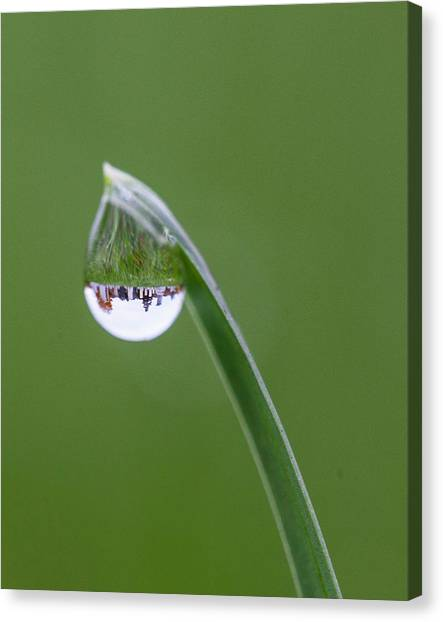 Blade Of Grass Canvas Print - Cemetery Dew by Barbara Friedman